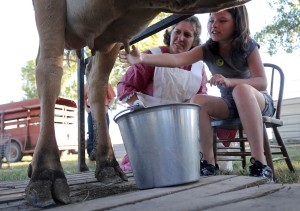 Kellie Thelander instructs Alaina Diggs a fourth grader at Eisenhower Elementary on how to milk her Jersey Cow by hand on Friday, Oct. 8, 2010 during an educational day at the Central Kansas Flywheels Yesteryear Museum educational day. The event promoted hands on expereinces in agriculture from various time periods of the past. (photo by Jeff Cooper/ Salina Journal)